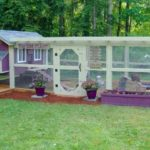Backyard Poultry Coops