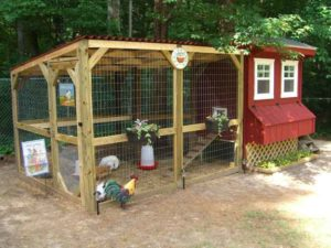 Best Backyard Chicken Coops