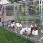 Best Chicken Coop Accessories