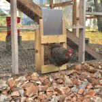 Best Chicken Coop Automatic Door
