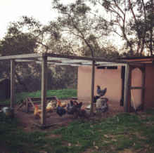 Cheapest Materials for Building a Chicken Coop