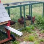 Chicken Coops for Sale