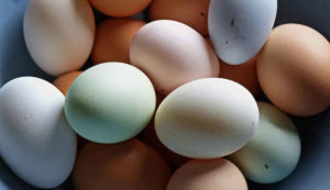 What Chicken Breed Lay Colored Eggs